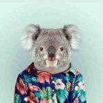 wallpaper koala