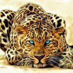 wallpaper leopard