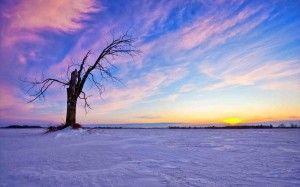 wallpaper albero tramonto
