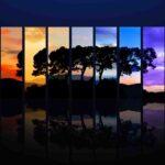 Wallpaper vetri colorati albero