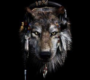 Wallpaper Indian wolf