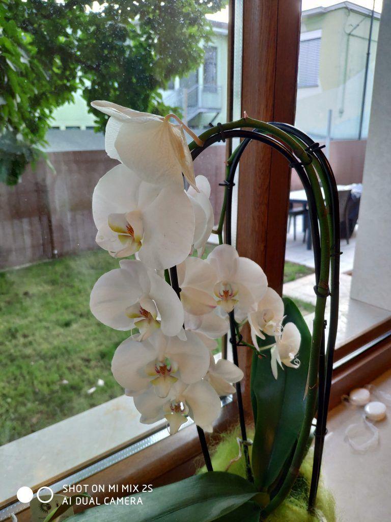Recensione Xiaomi Mi Mix 2S scatto orchidea