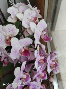 foto scatta da xiaomi mi 9 - fiore da vicino