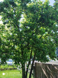 foto scattata da xiaomi redmi 7 - albero