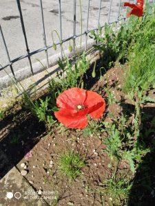 foto scattata da xiaomi redmi 7 - fiore sotto luce sole