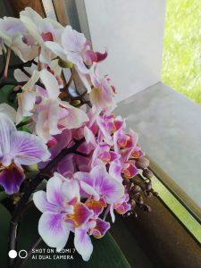 foto scattata da xiaomi redmi 7 - fiori da vicino