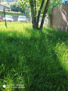 foto scattata da xiaomi redmi 7 - paesaggio con erba e sole