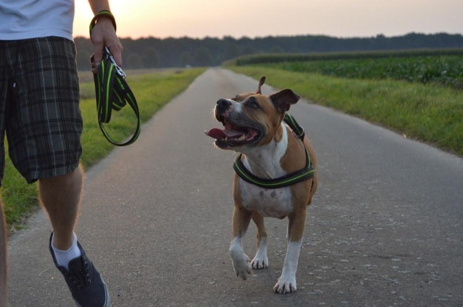 app per i proprietari di cani