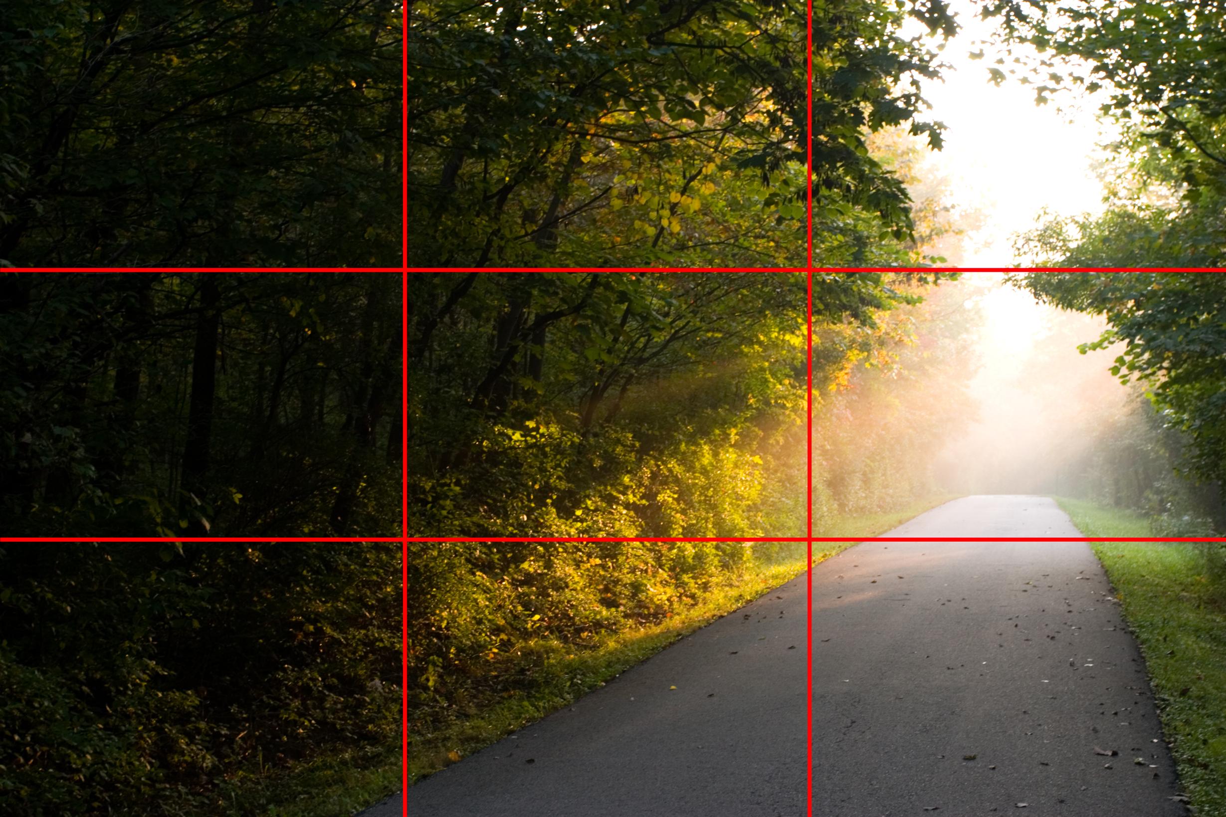 Un esempio della Regola dei terzi, utilizzata per scattare una foto in un bosco